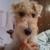 Dogwood Inn Kennel (Pet Services)