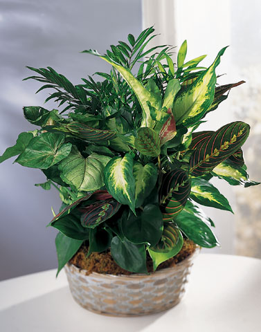 Spencer Floral, Spencer WV