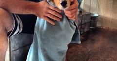 Dirty Dog Wash - Huntington Beach, CA