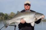 PointRunner's Smith Mountain Lake Striper Fishing