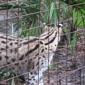 Big Cat Rescue - Tampa, FL