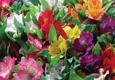 Scott's House Of Flowers - Lawton, OK