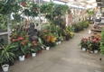 Moneta Nursery - Gardena, CA