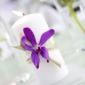 Flowers By Snellings - Winchester, VA