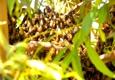 BeeWise Pest Control - Las Vegas, NV