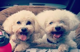 Winnie & Holly