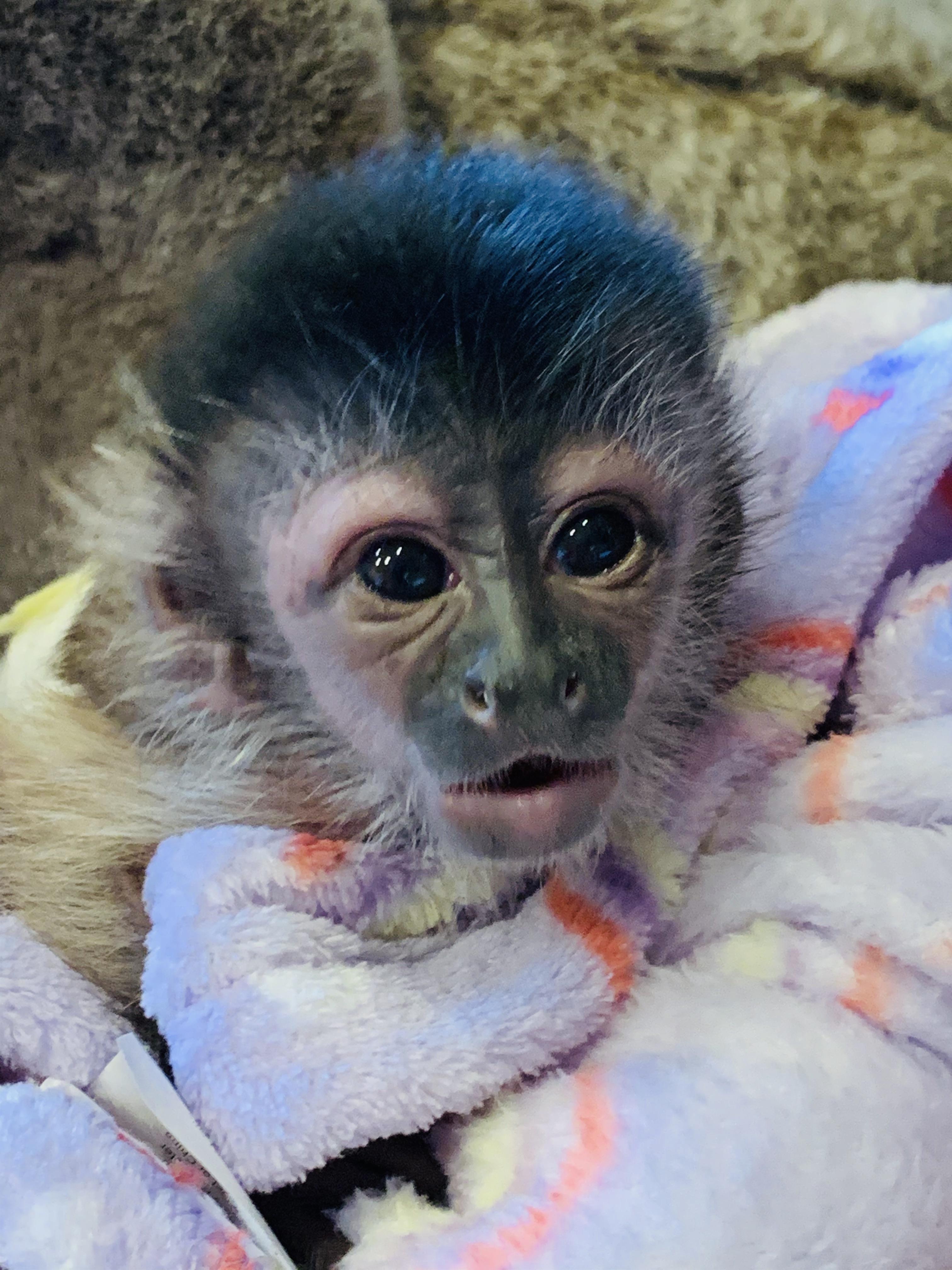 The Monkey Whisperer 6168 38th Ave N, Saint Petersburg, FL 33710 - YP.com