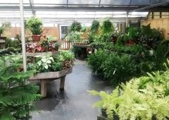King S Greenhousse Garden Center Matthews Nc