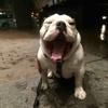 Swifto Dog Walking Chelsea