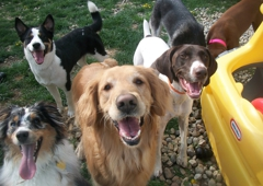 Best Friends Pet Care - Indianapolis, IN