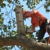 Axe to Grind Tree Service, LLC