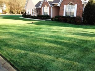 Lawn Paint