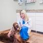 Chateau Veterinary Hospital - Kenner, LA