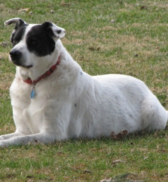 Logue's TLC Pet Hospital, LLC - Richmond, IN. My dog Rocket