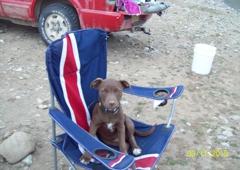 San Juan Animal League - Farmington, NM