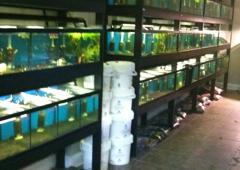 The Aquarium Store - Baton Rouge, LA