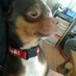 Teekay Pets & Supplies - Ponca City, OK
