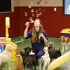 Blue Springs Animal Hospital & Pet Resort - CLOSED