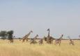 Open Africa Safaris - Houston, TX
