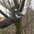Hallmark Tree Solutions