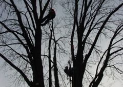 Whole Tree Care by Trapper's Tree Service (Columbus, Ohio) - Hilliard, OH