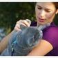 VCA Holly Street Animal Hospital - San Carlos, CA