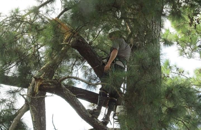 Southeastern Tree Experts - Sumter, SC