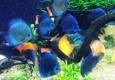 Georgia Aquarium - Atlanta, GA