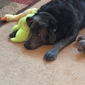 Country Veterinary Clinic - Rubicon, WI. Thunder, our silverlab loves Dr Jackie
