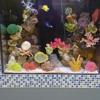 B S Fish Tanks