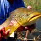 The Angler's Edge - Gardnerville, NV