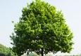 Potter's Tree Service - New Berlin, WI. Tree Service
