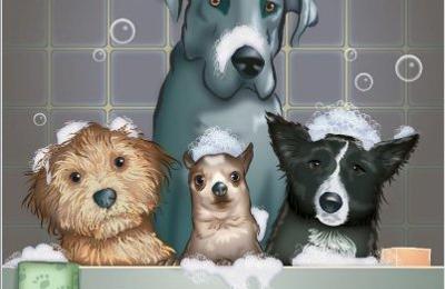 Patty's Dog Grooming - Abbottstown, PA