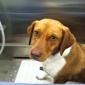 Sweet Paws Pet Grooming - Orange, CA