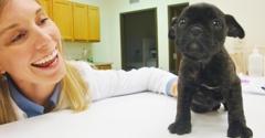 MY Vet Animal Hospital - Westerville, OH