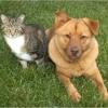 Pet Clinic At Woods Corner