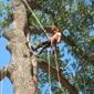 DeNisi Tree Service - Hamden, CT
