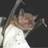 Indiana Pest Control