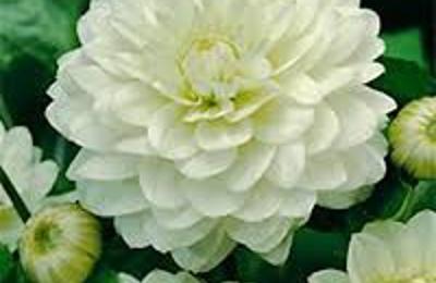 Quinns flower farms 97 wilson ave medford ny 11763 yp quinns flower farms medford ny mightylinksfo