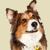 Odyssey Veterinary Care