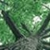 Asheville Tree Service & Landscaping by BuckTom Services, LLC
