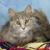 Kentucky Humane Society adoptions at Dixie Feeders Supply