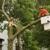 Indiana Tree Service