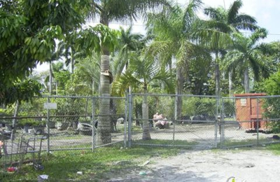 Forever Green Nursery Miami Fl