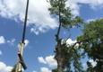 J.P. Tree LLC - Saint Charles, MO
