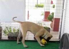 Cowdog and Sassy Cat Pet Salon - Taylor, TX