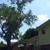 A B C 12 Tree - CLOSED