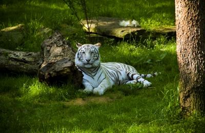 Nashville Zoo at Grassmere - Nashville, TN