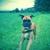 LOYAL DOG BOARDING & DAY CARE