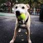 Swifto Dog Walking Upper West Side - New York, NY